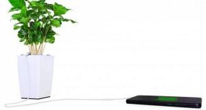 11595-et-si-vous-demandiez-a-vos-plantes-de-re-630x0-2